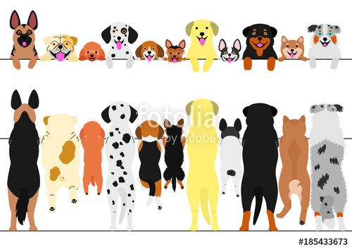 best dogs images. Back clipart dog