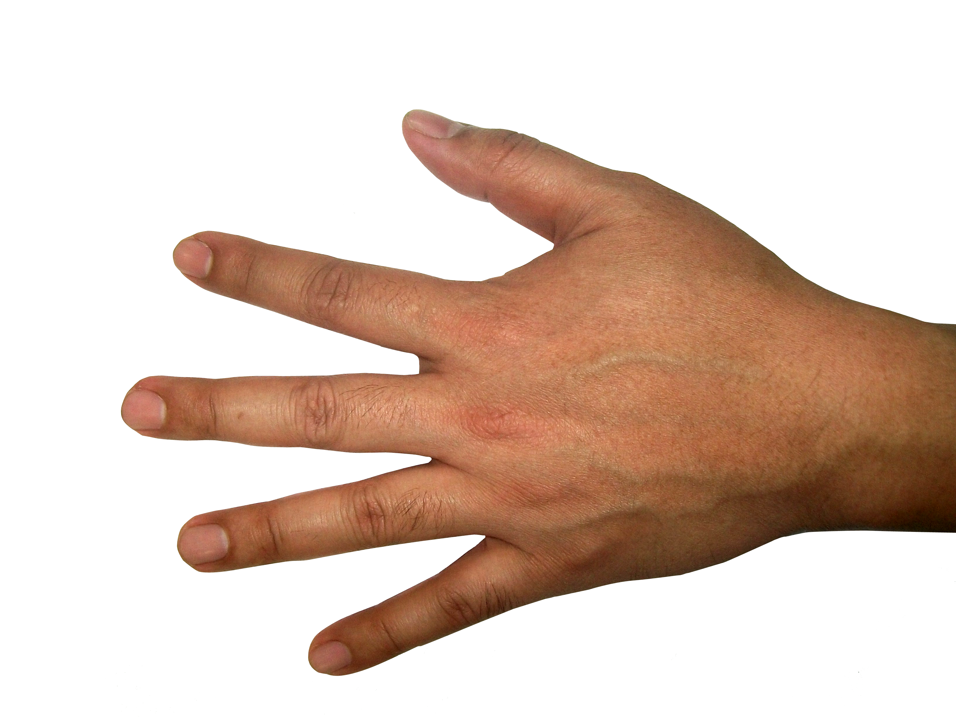 Hands png free images. Fingers clipart open hand
