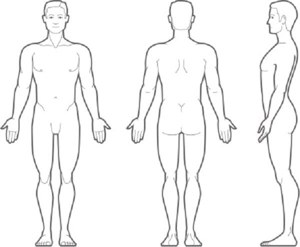 Back clipart human back. Free anatomy cliparts download