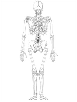 Free bones and skeletons. Back clipart human back