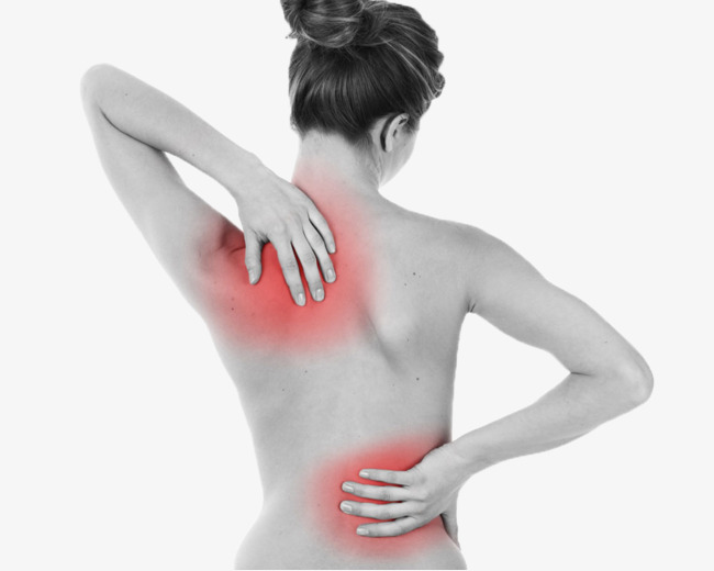 Ms lumbago png image. Back clipart muscle pain