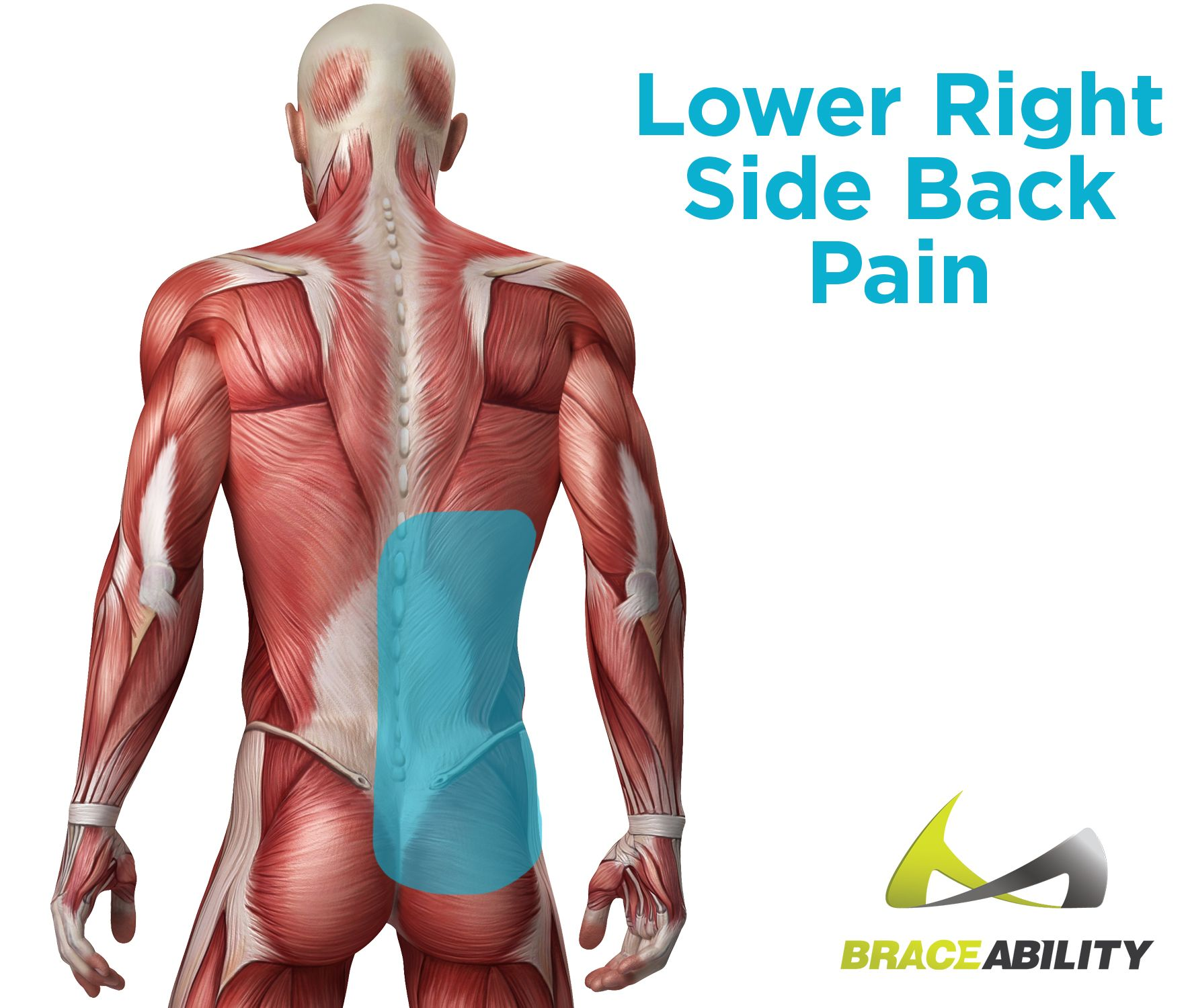 Right side pain body. Back clipart muscle spasm