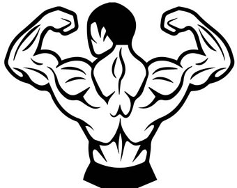 Muscle cilpart excellent ideas. Back clipart muscular