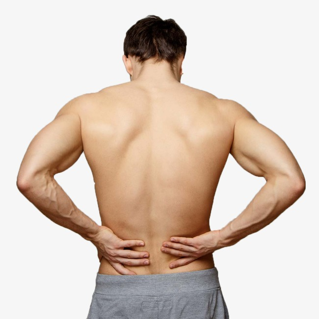 Back clipart muscular. Men s fitness png