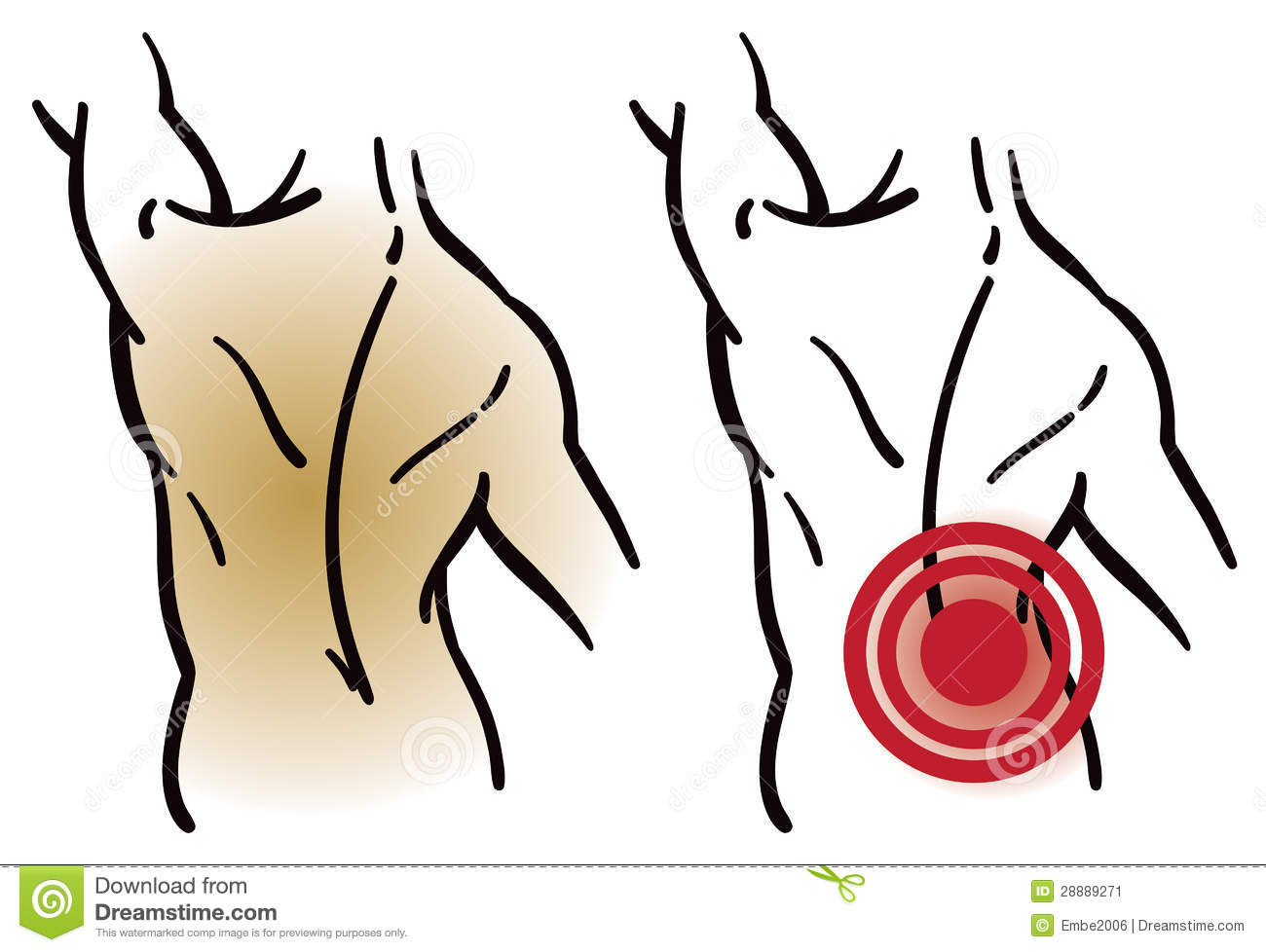 Muscles . Back clipart muscular