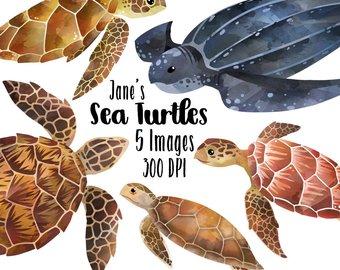 Watercolor etsy turtles species. Back clipart sea turtle