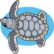 Back clipart sea turtle. Search results for clip