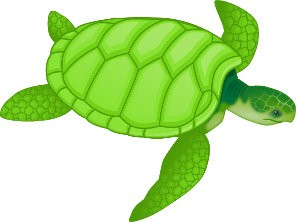 Back clipart sea turtle. Free turtles cliparts download