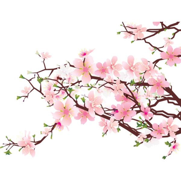 Background clipart cherry blossom. Clip art free best