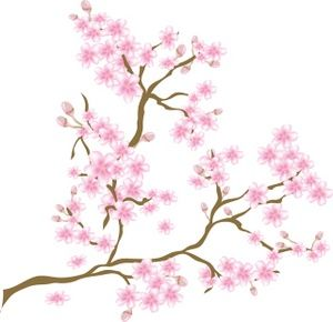 Background clipart cherry blossom.  best blossoms images