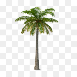 Background clipart palm tree. Png images download resources