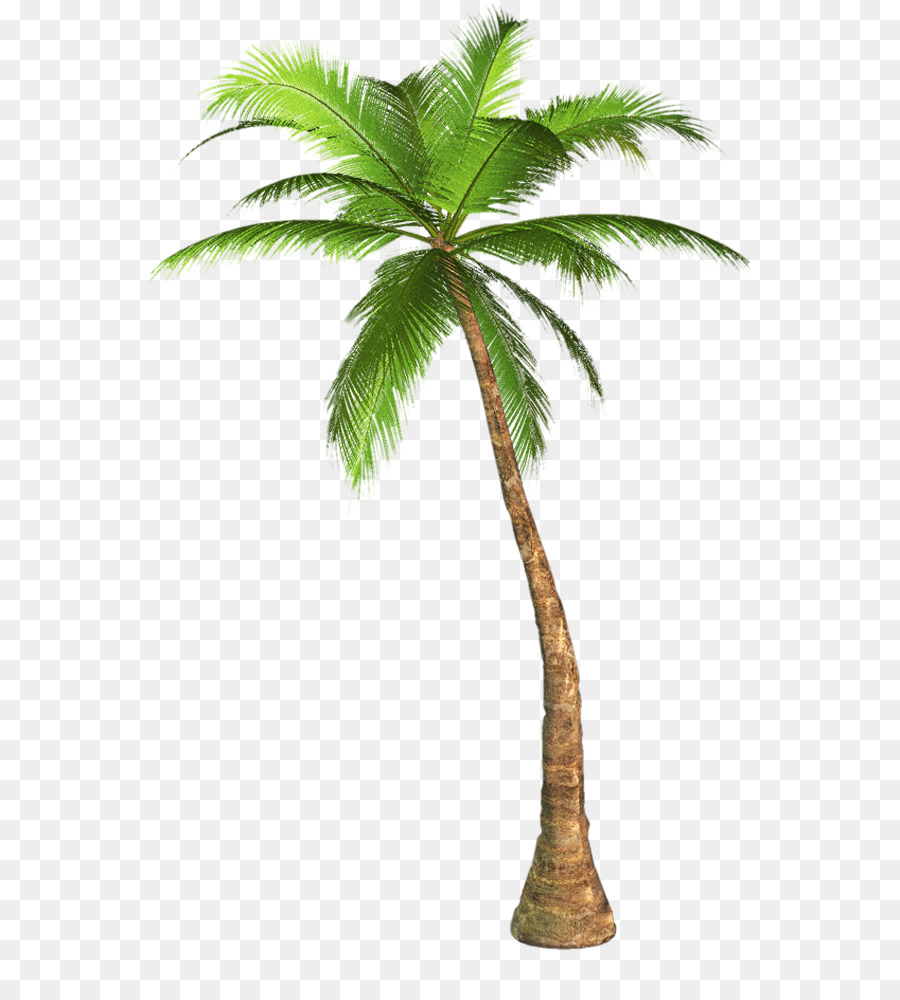 Background clipart palm tree. Arecaceae clip art transparent