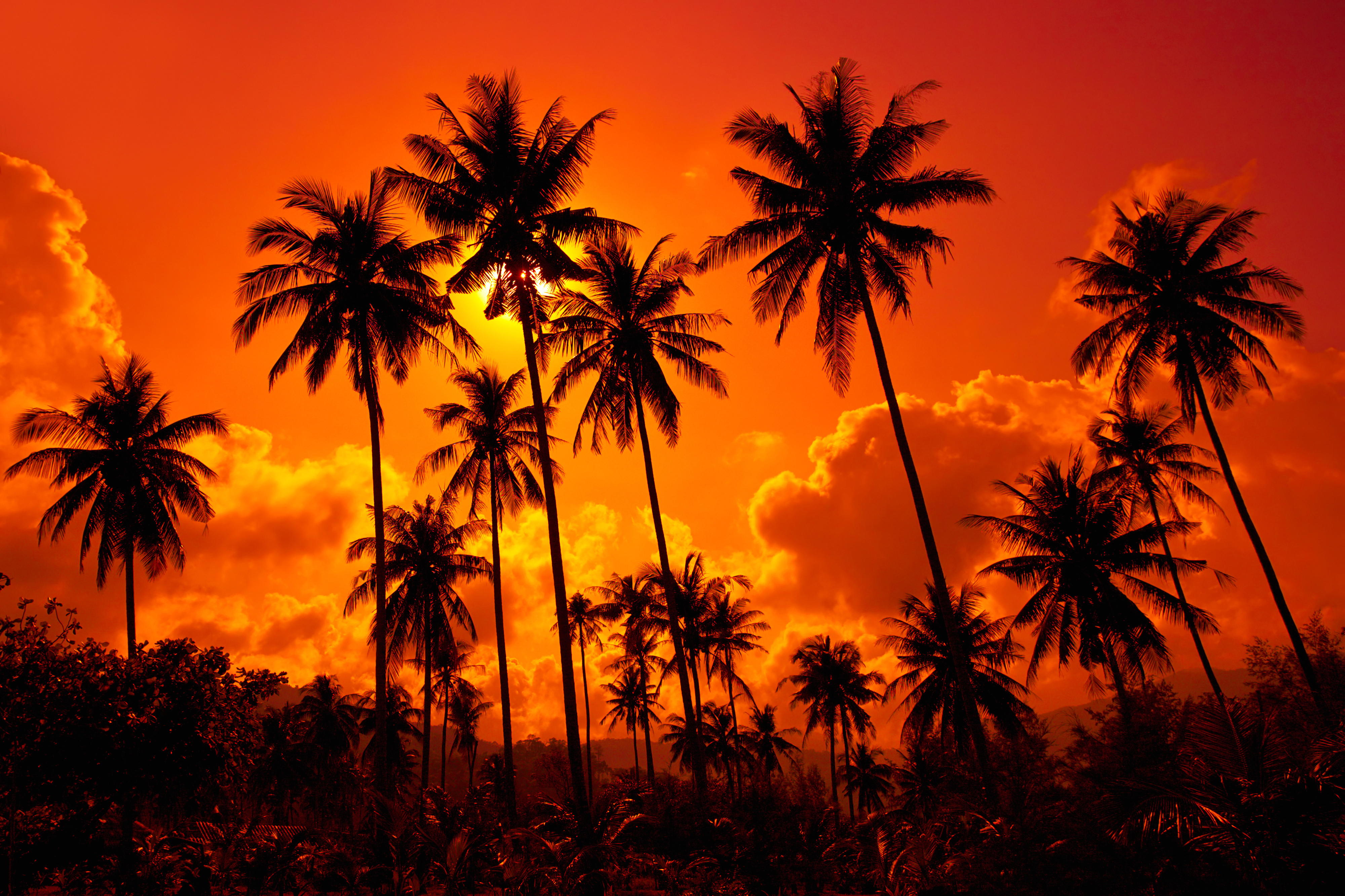 Background clipart sunset. Tropical gallery yopriceville high