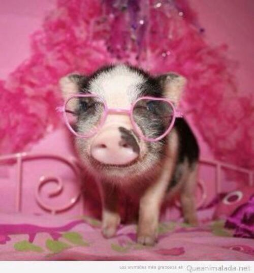 best images on. Bacon clipart micro pig