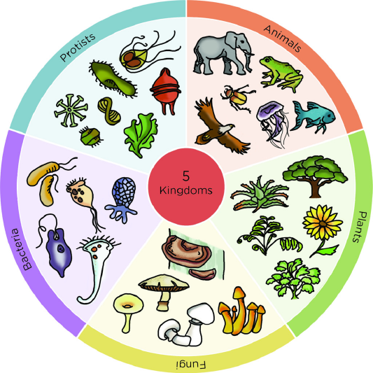 Archaea a whole domain. Bacteria clipart archaebacteria
