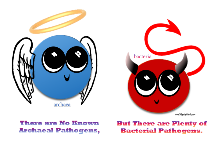 Bacteria clipart archaebacteria. And archaea scientist cindy