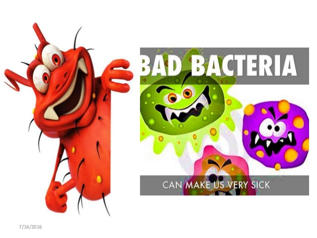 Bacteria clipart bacilli. Morphology reproduction and functions