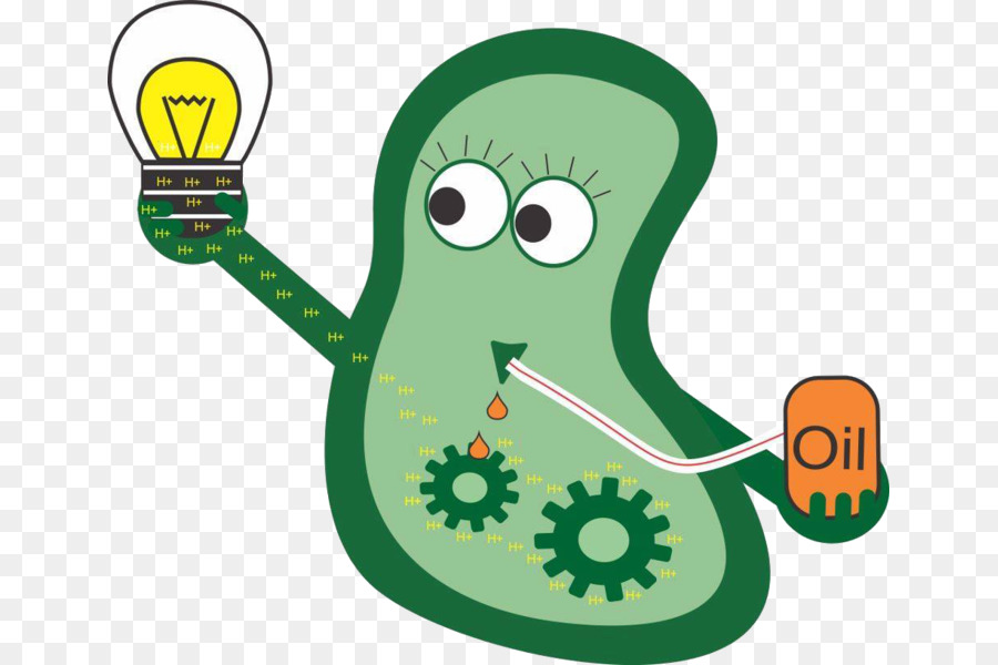 Shewanella oneidensis international genetically. Bacteria clipart biology