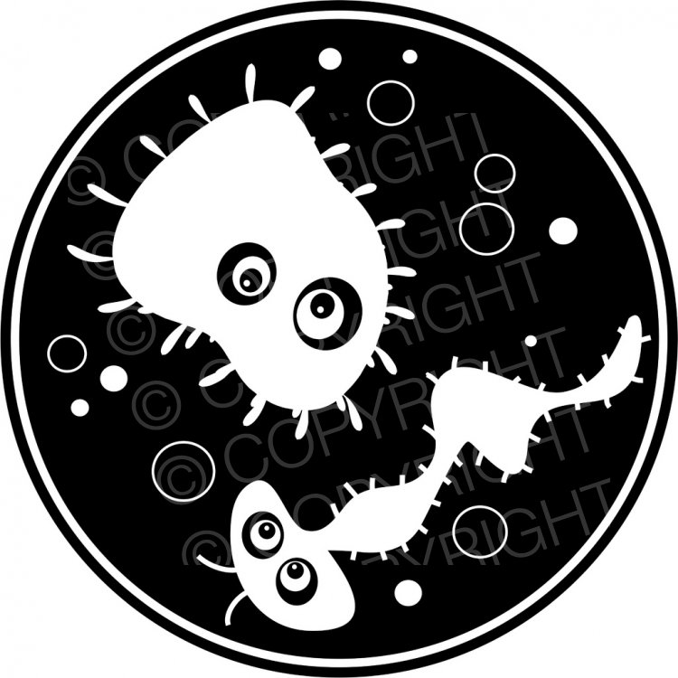 Growing in a petri. Bacteria clipart black and white