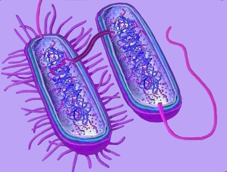 Bacteria clipart eubacteria. Archaea conjugation