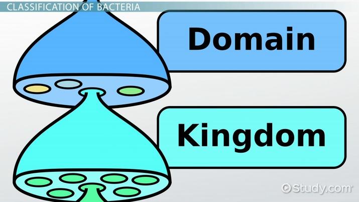Bacteria clipart eubacteria. Kingdom definition examples video