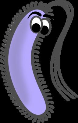 Prokaryote cell coloring . Bacteria clipart eubacteria