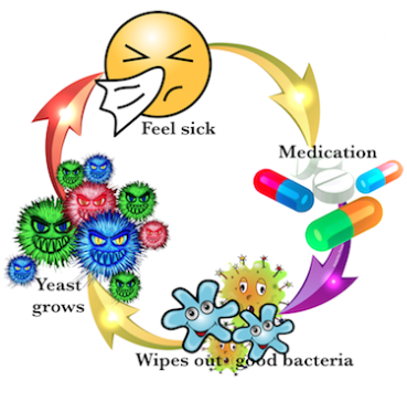 Bacteria clipart fungal infection. Candidahgawigrads karenlangston you get