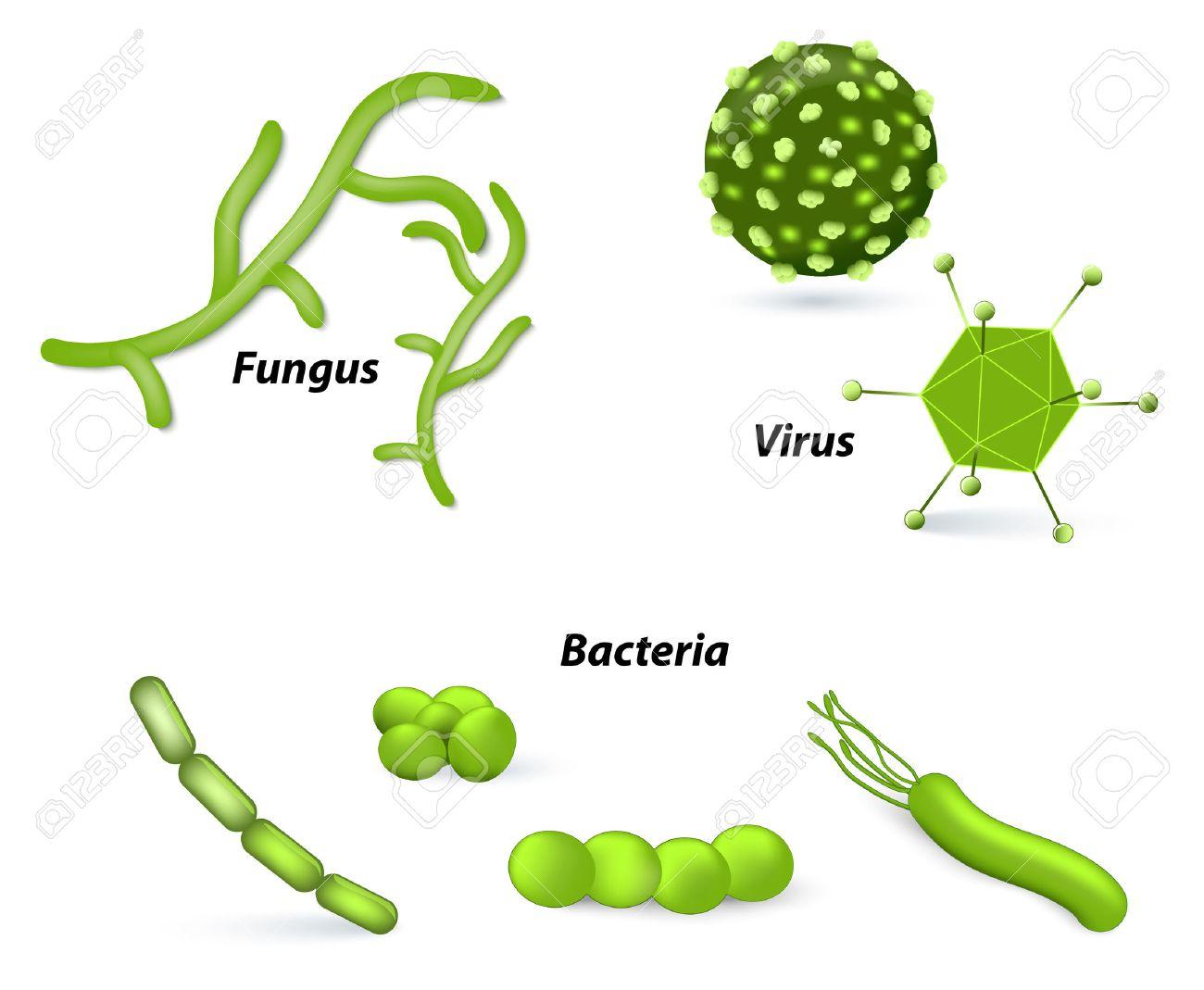 Bacteria clipart fungus bacteria. Fungi