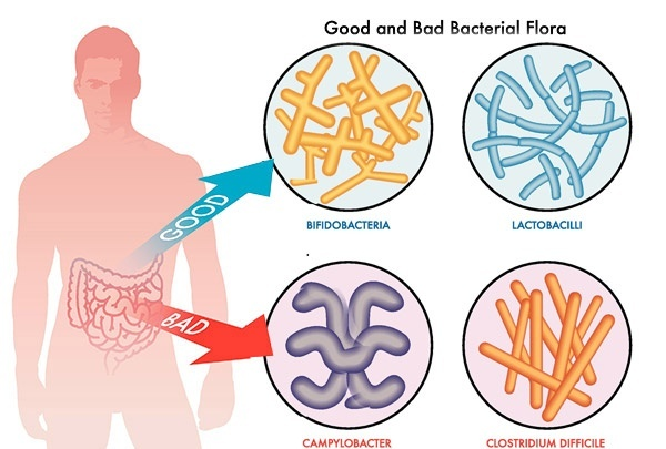 What are three examples. Bacteria clipart harmful bacteria