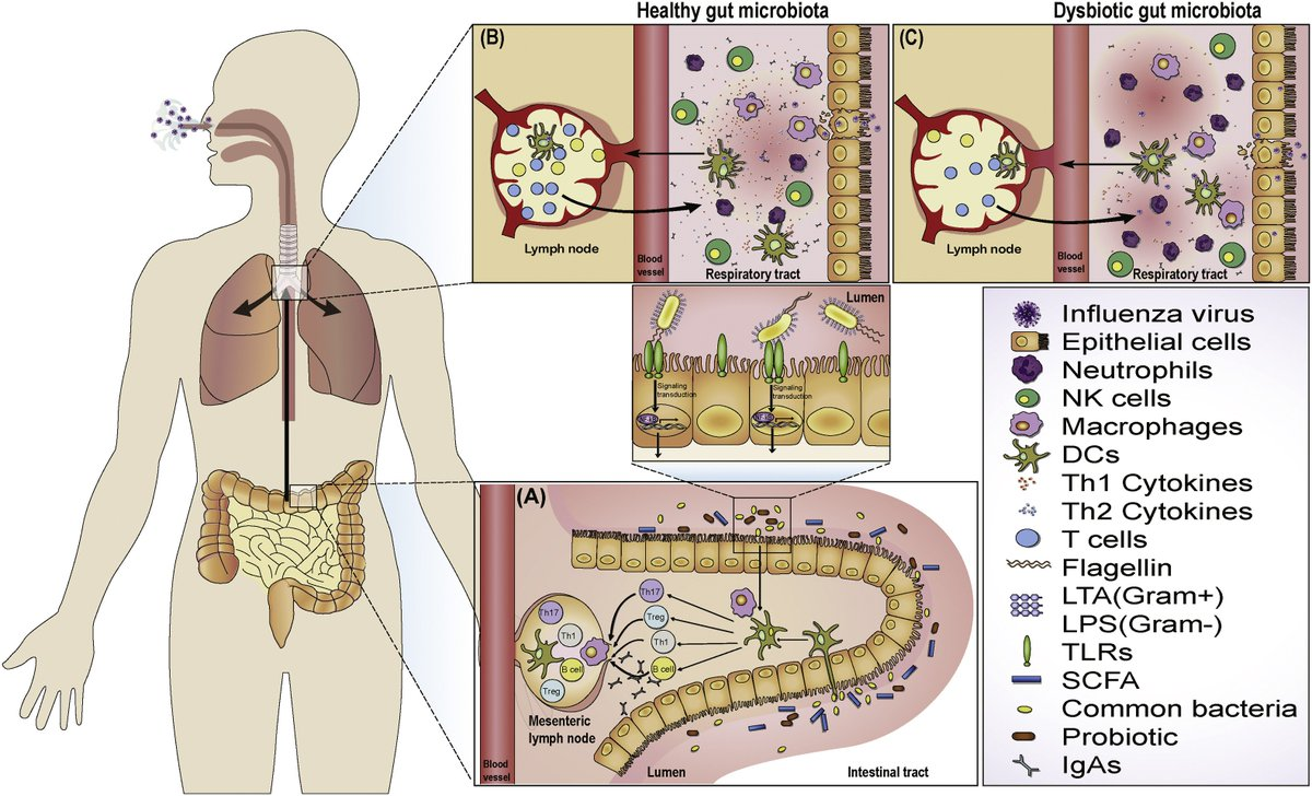 Bacteria clipart immunology. Microbes infection on twitter