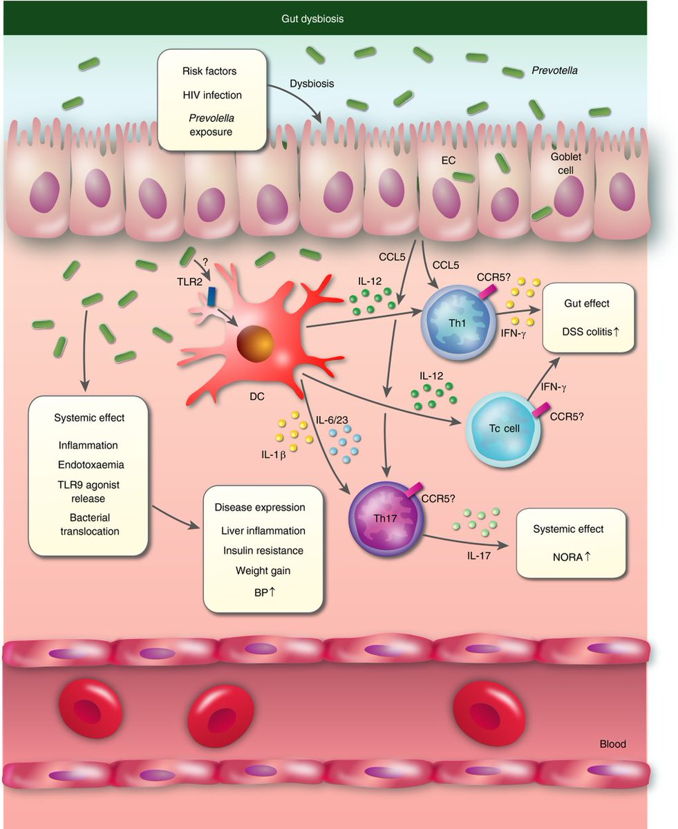 On twitter the immune. Bacteria clipart immunology