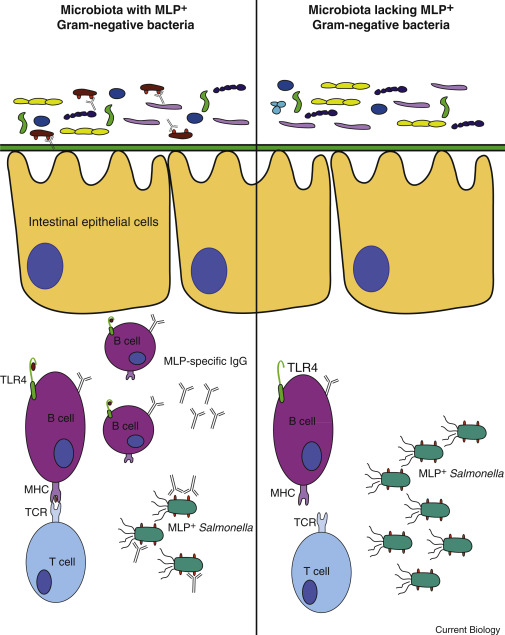 Bacteria clipart immunology. You remind me of