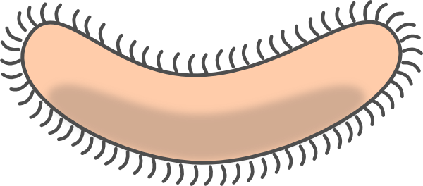 bacteria clipart outline