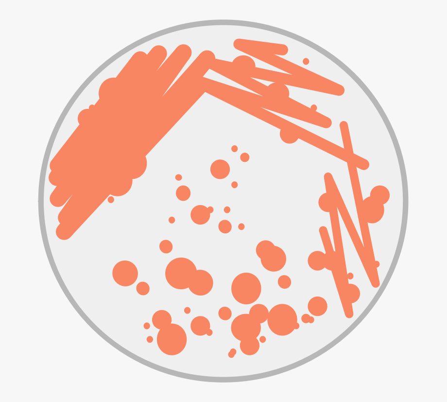 Bacteria clipart petri dish. This png file is