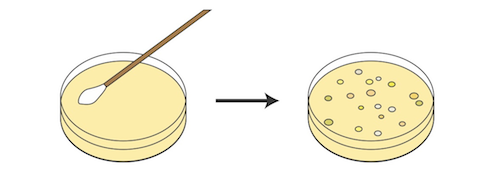 Bacteria clipart petri dish. Biology the postulate and