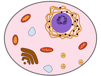 Microbes mr g s. Bacteria clipart science