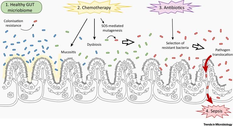 Not just antibiotics is. Bacteria clipart sepsis
