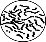 Search results for clip. Bacteria clipart streptococcus