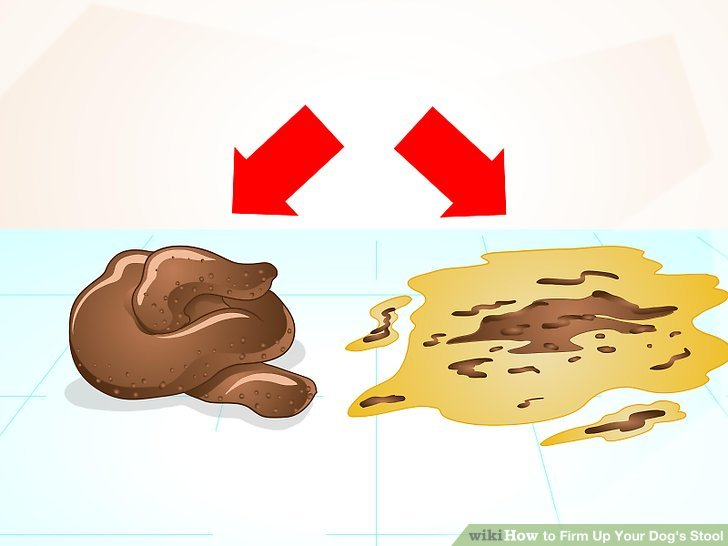 Bad clipart dysentery.  ways to firm