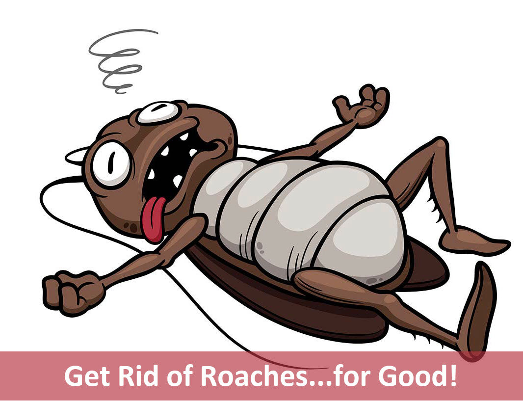 The bed bug blog. Bad clipart typhus