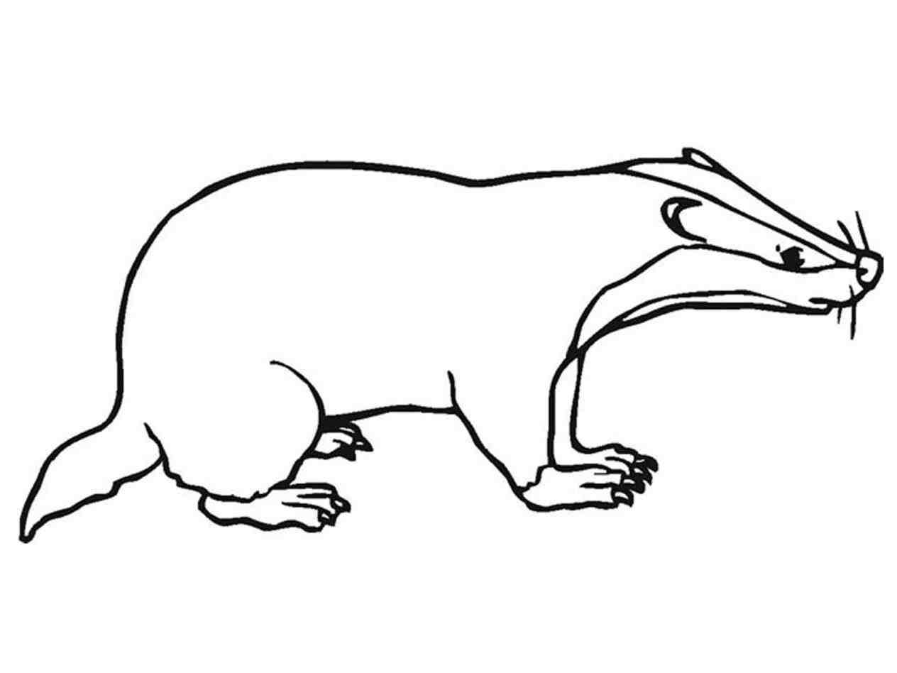 Launching honey coloring page. Badger clipart american badger