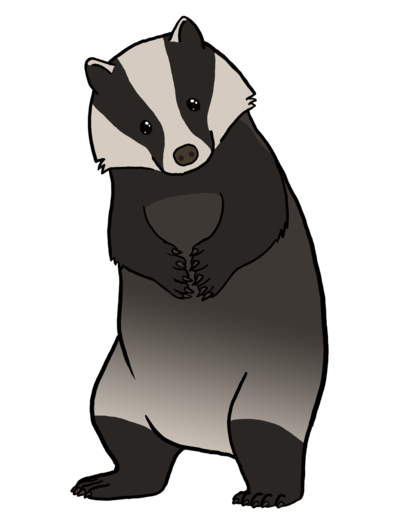 Badger clipart american badger. European does care by