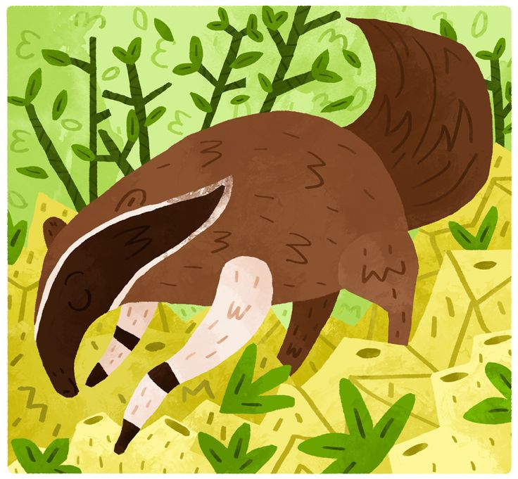 Badger clipart ant eater.  best anteater fun