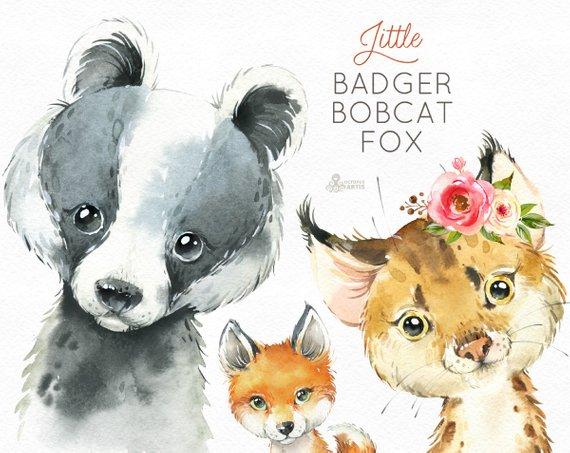 Little badger fox watercolor. Bobcat clipart baby