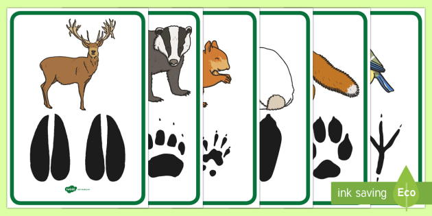 Animal footprints poster pack. Woodland clipart wildlife british