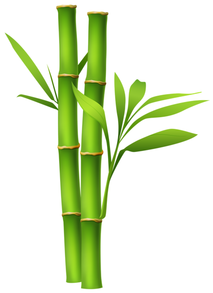 Bamboo border png. Image clipart pinterest