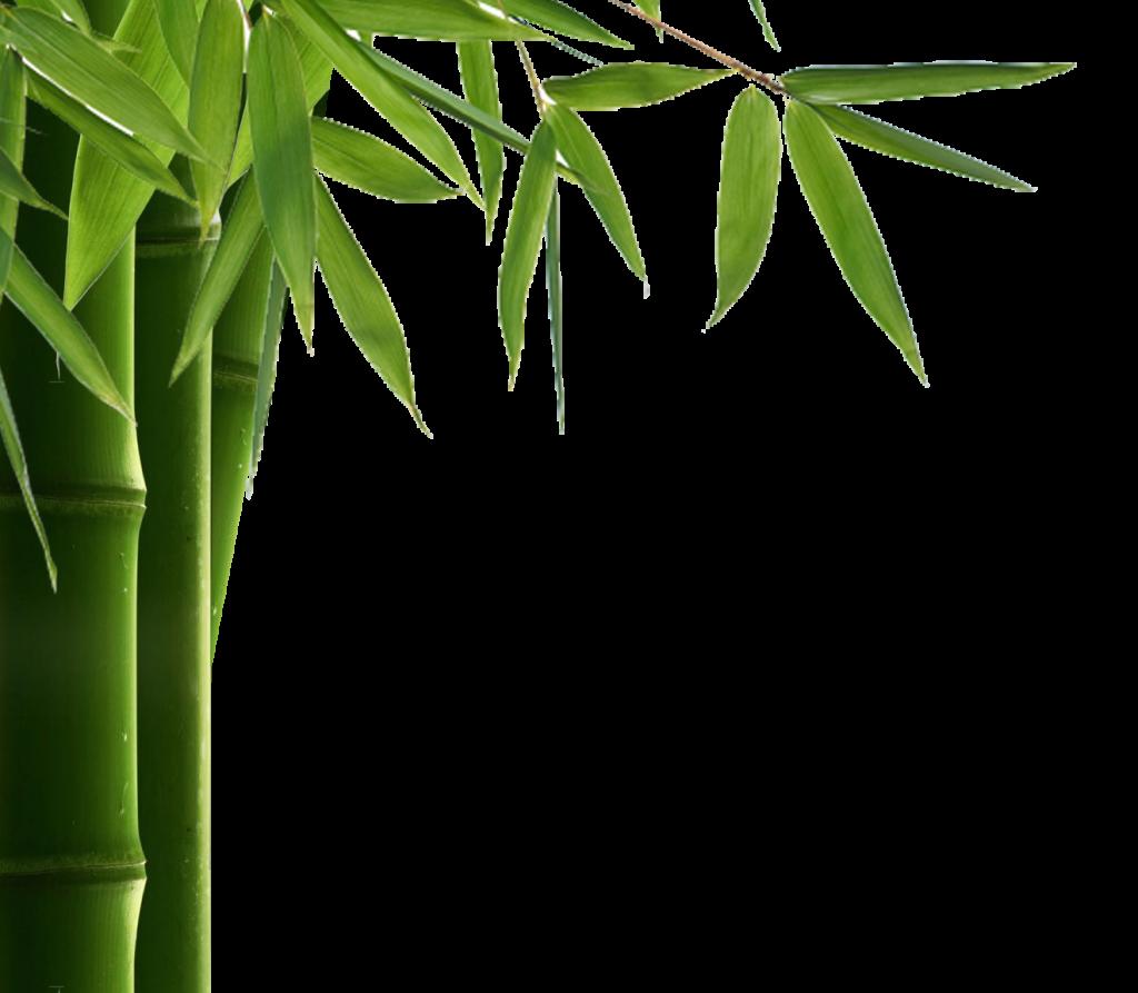 Leaf hd peoplepng com. Bamboo border png