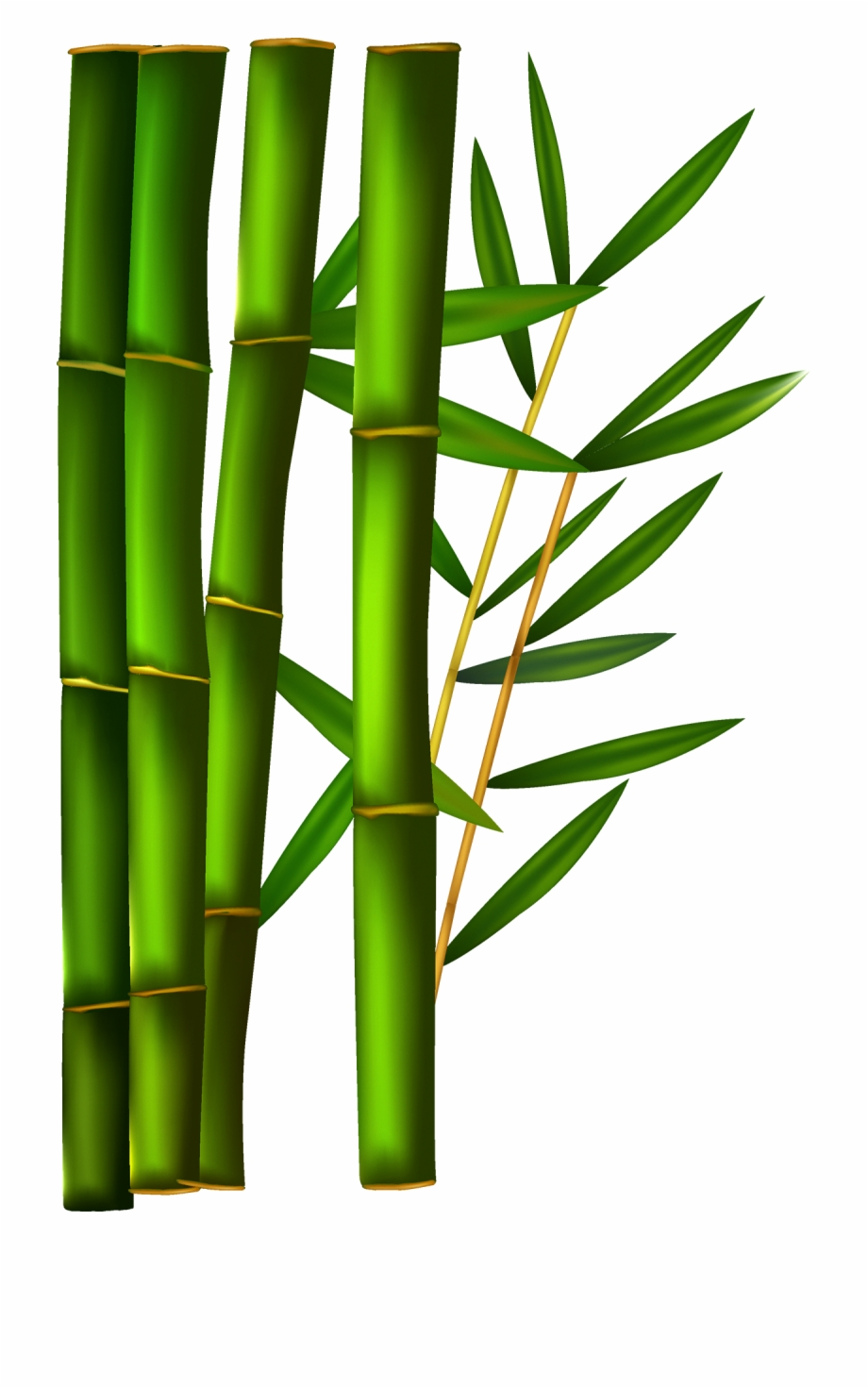 Bamboo clipart. Transparent background free png