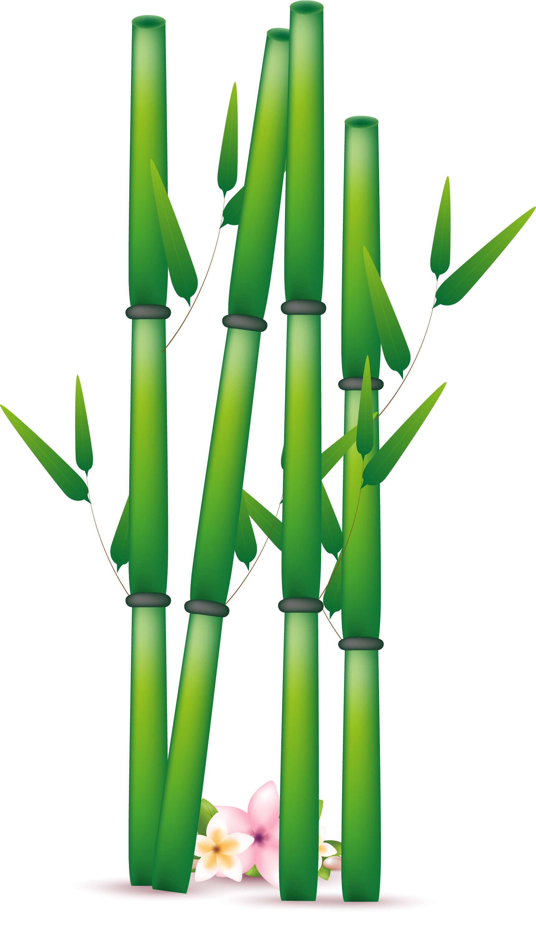 Bamboo clipart. Png transparent free images