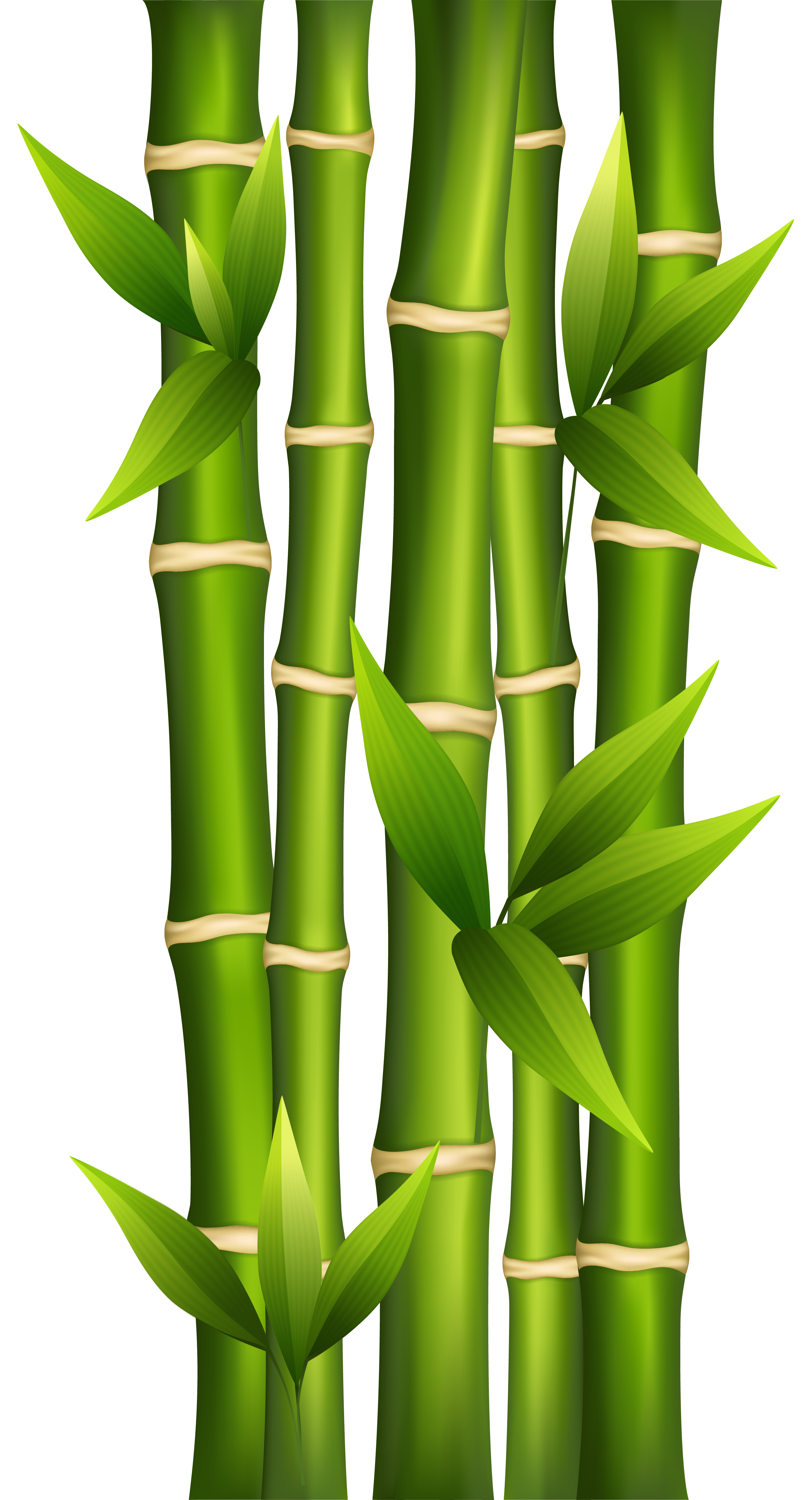 Bamboo clipart. Antivirus in drawing
